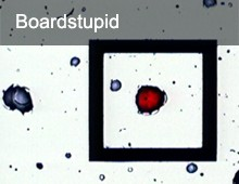 Boardstupid